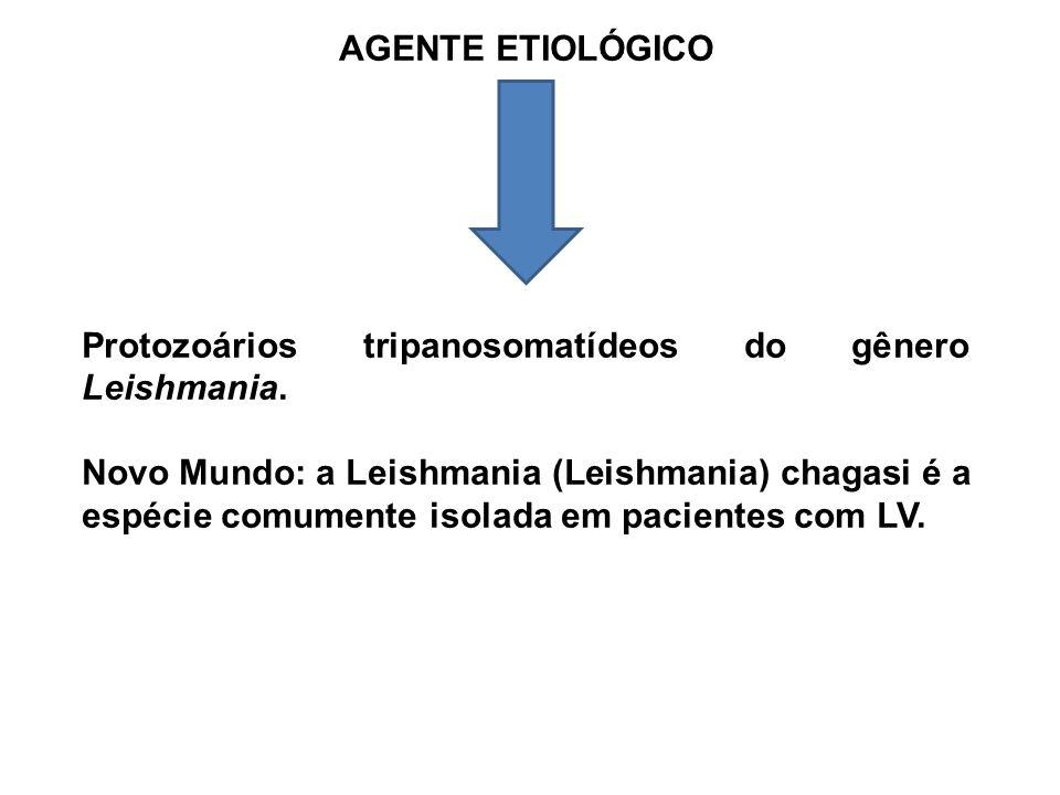AGENTE ETIOLÓGICO Protozoários tripanosomatídeos do gênero Leishmania.