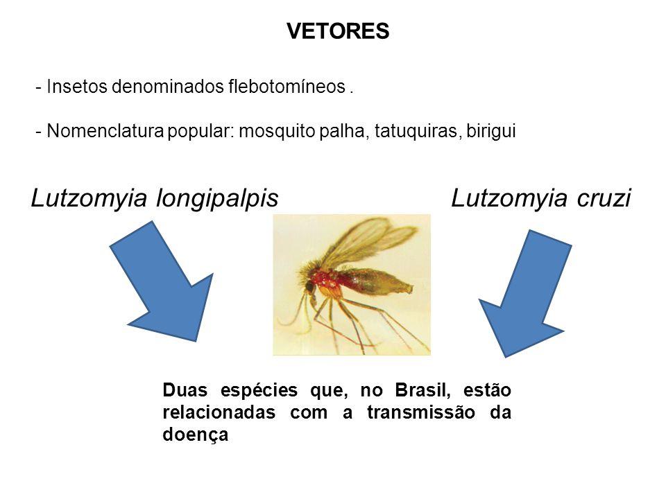 Lutzomyia longipalpis Lutzomyia cruzi