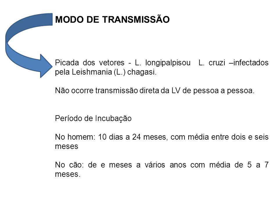 MODO DE TRANSMISSÃO Picada dos vetores - L. longipalpisou L. cruzi –infectados pela Leishmania (L.) chagasi.