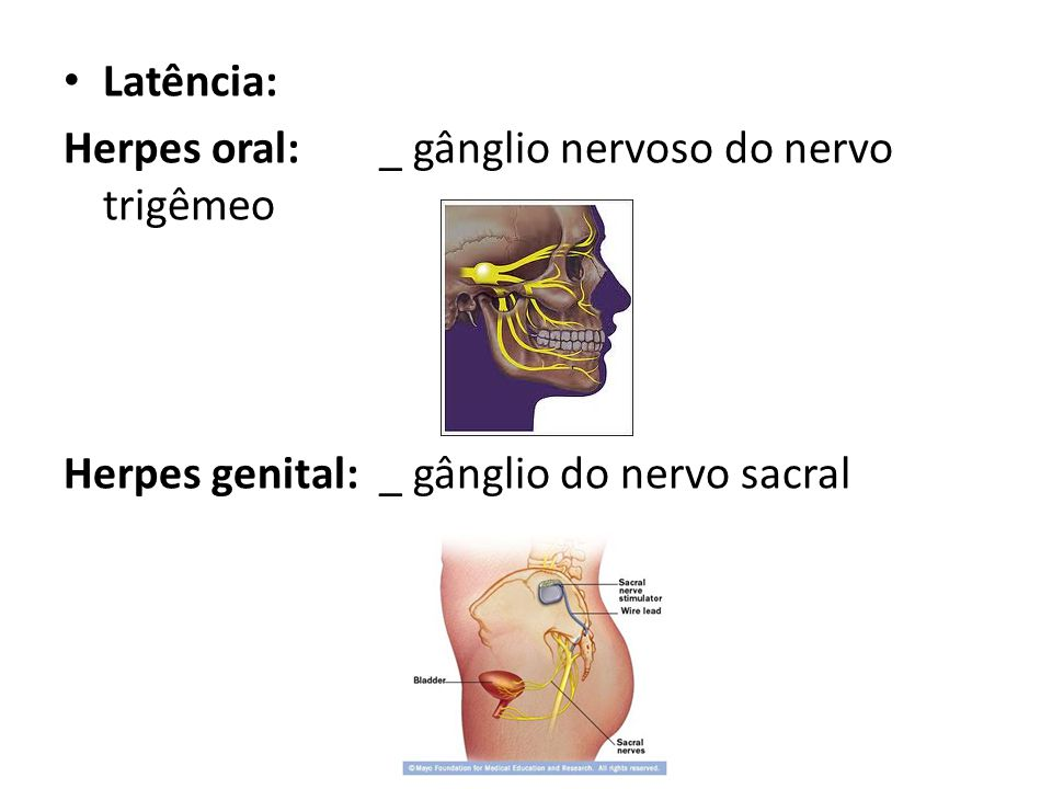 Latência: Herpes oral: _ gânglio nervoso do nervo trigêmeo.