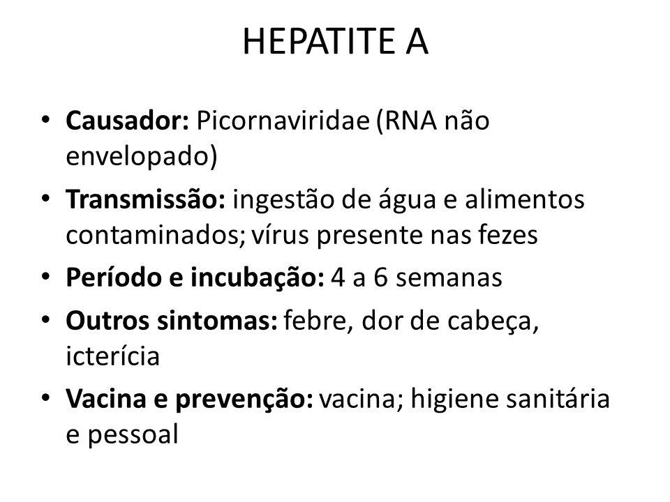 HEPATITE A Causador: Picornaviridae (RNA não envelopado)
