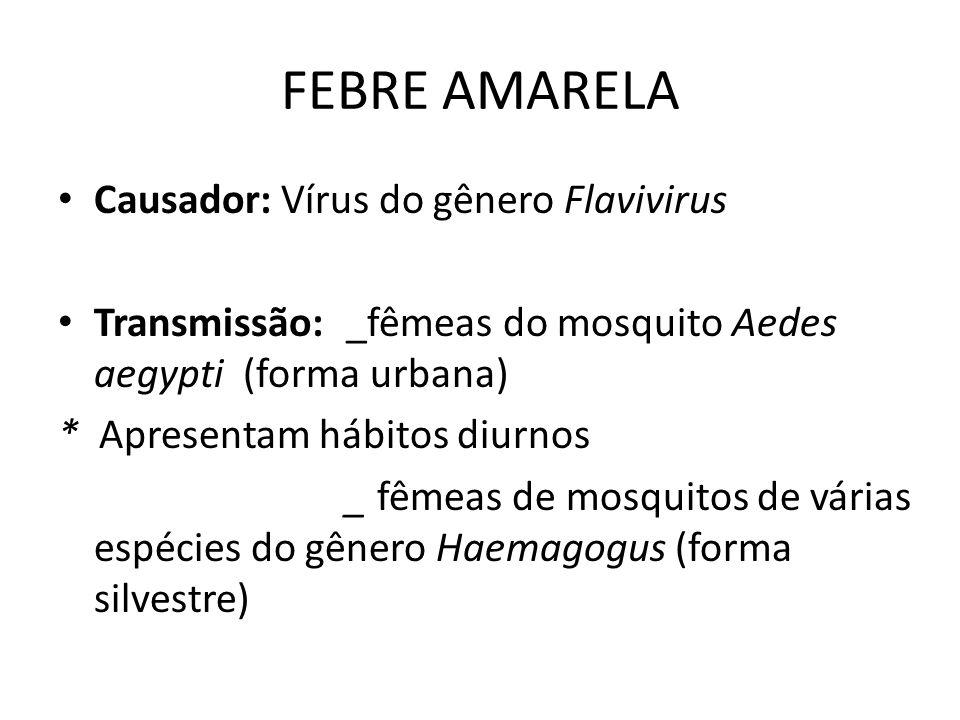 FEBRE AMARELA Causador: Vírus do gênero Flavivirus