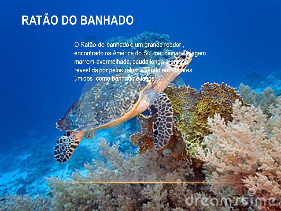 RATÃO DO BANHADO