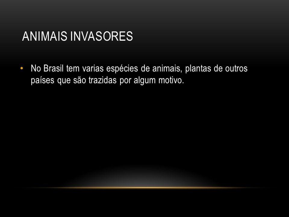 Animais invasores No Brasil tem varias espécies de animais, plantas de outros países que são trazidas por algum motivo.