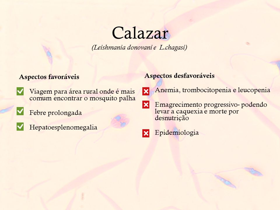 Calazar (Leishmania donovani e L.chagasi) Aspectos favoráveis