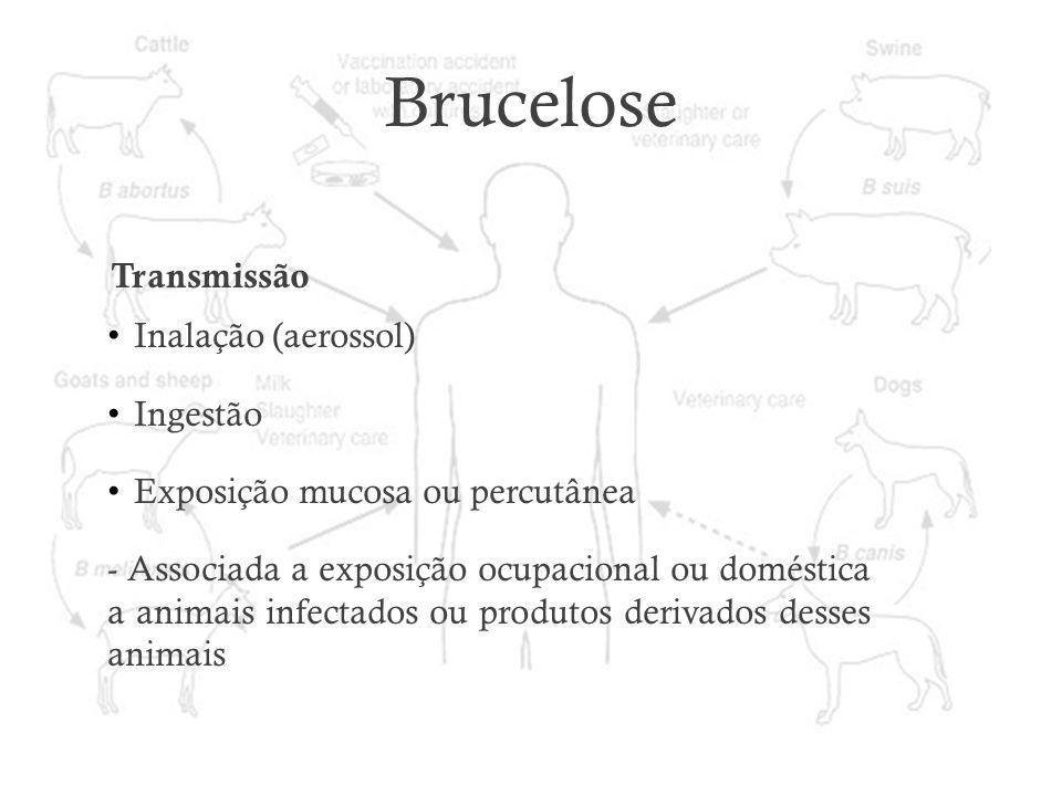 Brucelose Transmissão Inalação (aerossol) Ingestão