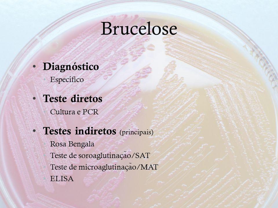 Brucelose Diagnóstico Teste diretos Testes indiretos (principais)