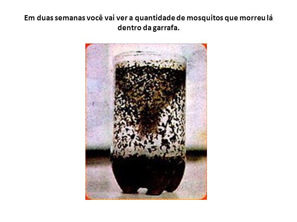 Em duas semanas você vai ver a quantidade de mosquitos que morreu lá dentro da garrafa.