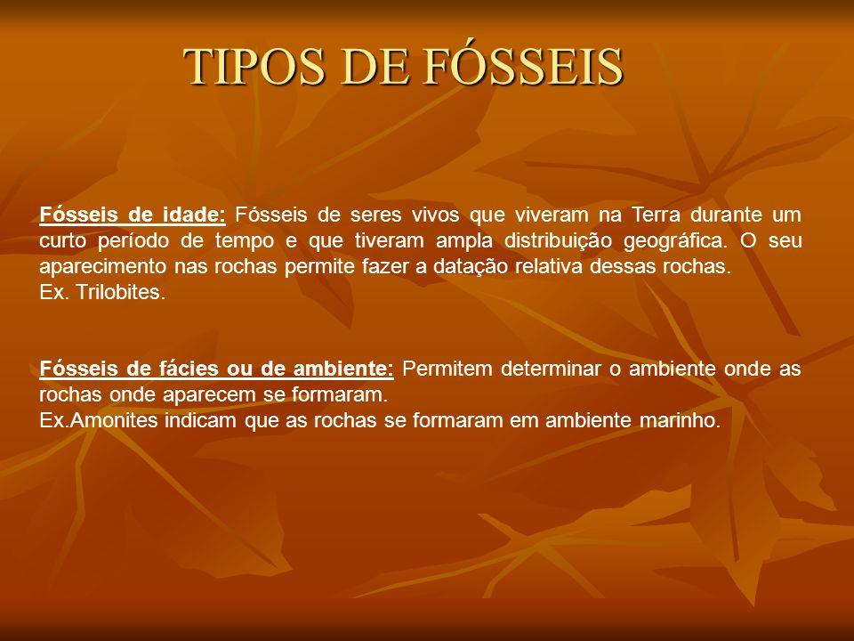 TIPOS DE FÓSSEIS
