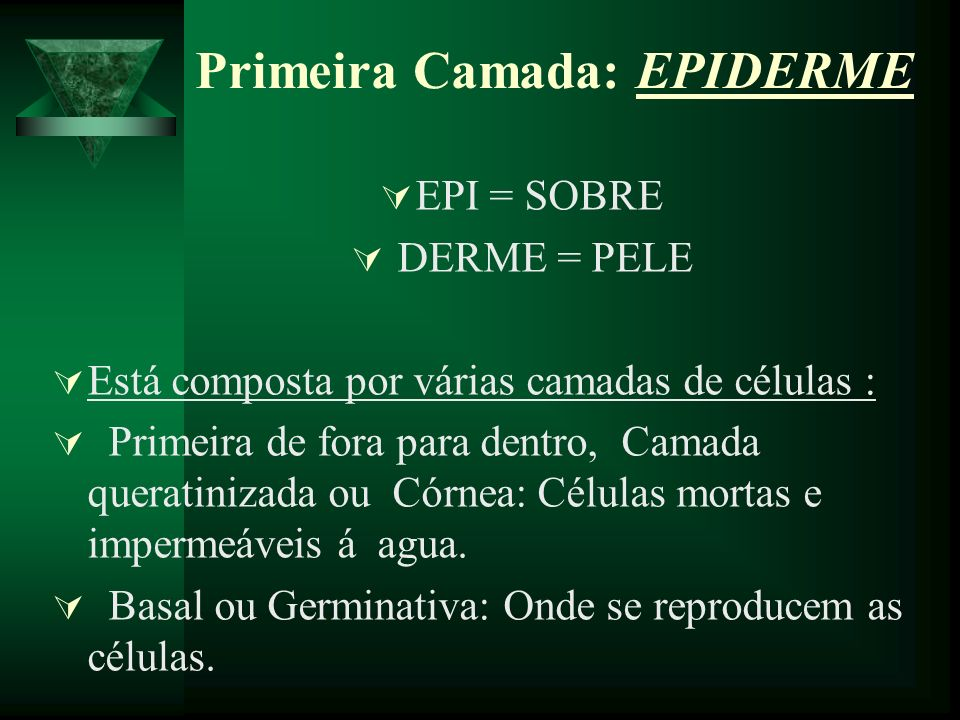 Primeira Camada: EPIDERME