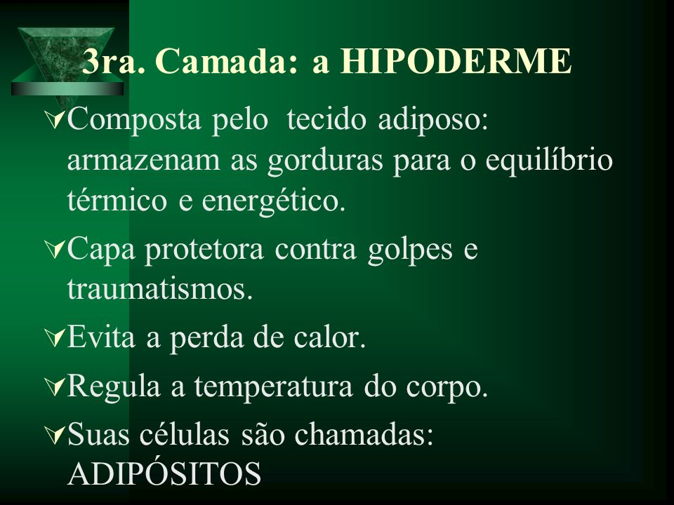 3ra. Camada: a HIPODERME Composta pelo tecido adiposo: armazenam as gorduras para o equilíbrio térmico e energético.