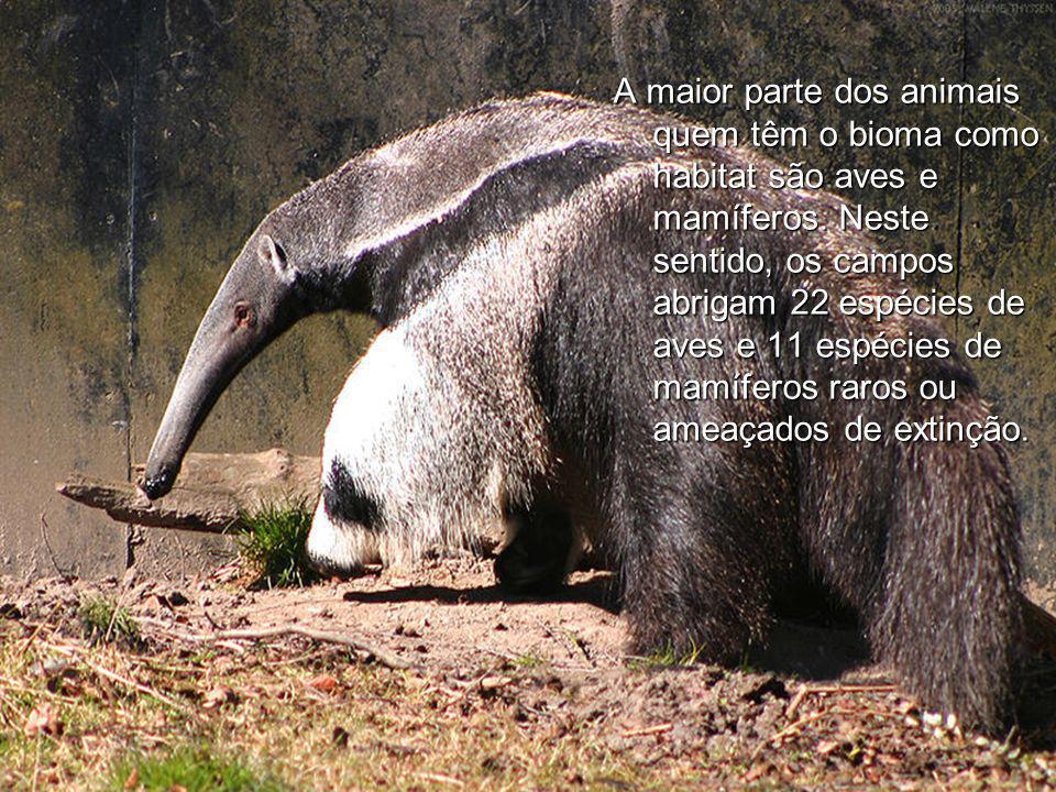 A maior parte dos animais quem têm o bioma como habitat são aves e mamíferos.