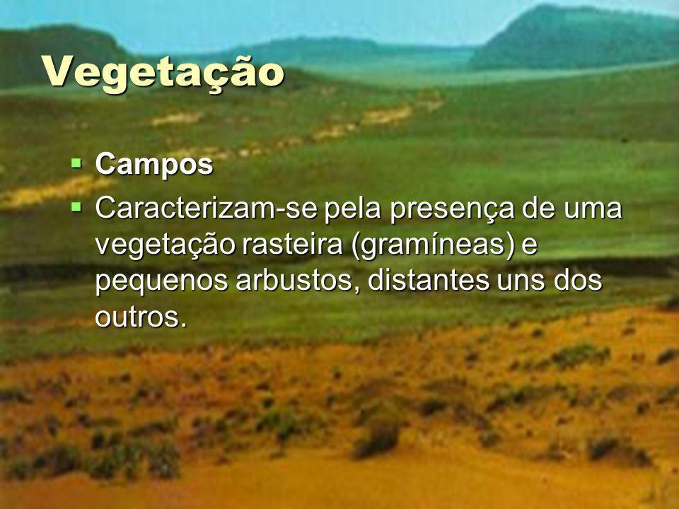 Vegetação Campos.
