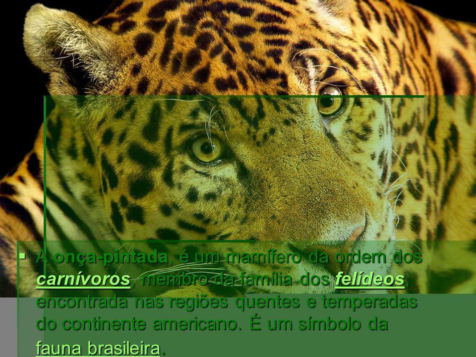 A onça-pintada, é um mamífero da ordem dos carnívoros, membro da família dos felídeos, encontrada nas regiões quentes e temperadas do continente americano.