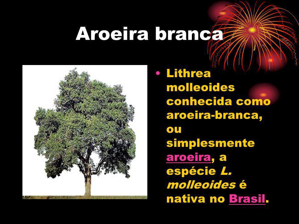 Aroeira brancaLithrea molleoides conhecida como aroeira-branca, ou simplesmente aroeira, a espécie L.