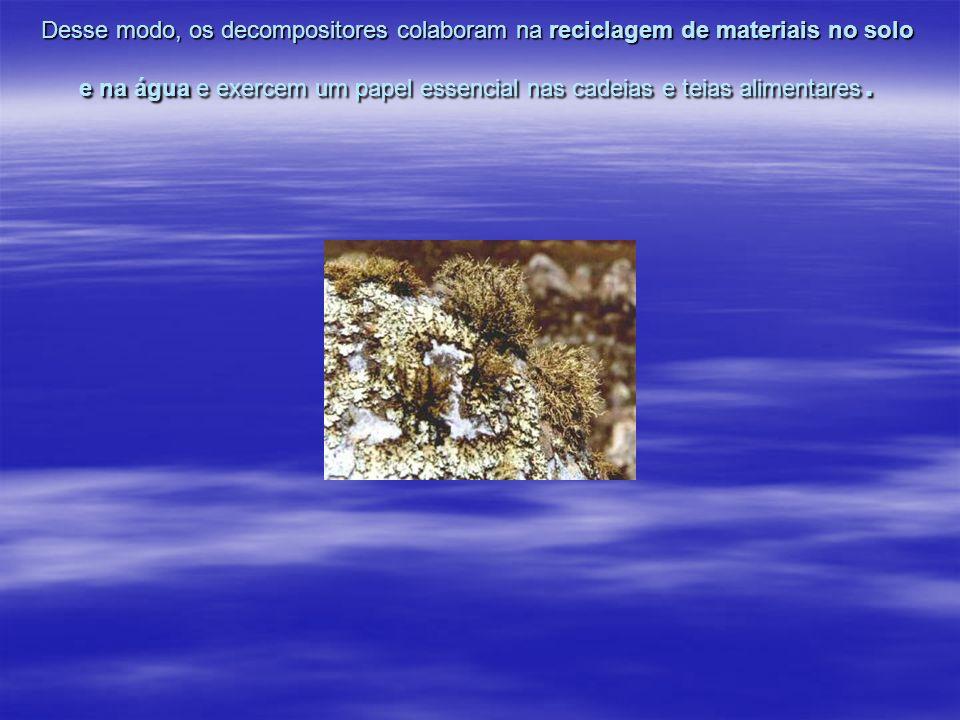 Desse modo, os decompositores colaboram na reciclagem de materiais no solo e na água e exercem um papel essencial nas cadeias e teias alimentares.