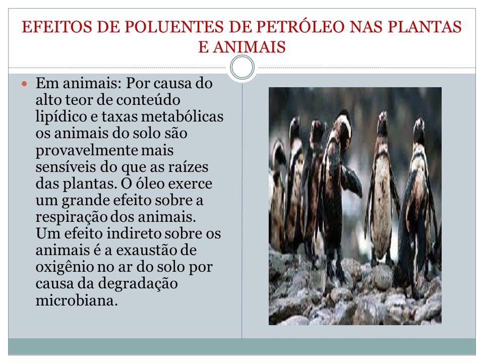 EFEITOS DE POLUENTES DE PETRÓLEO NAS PLANTAS E ANIMAIS