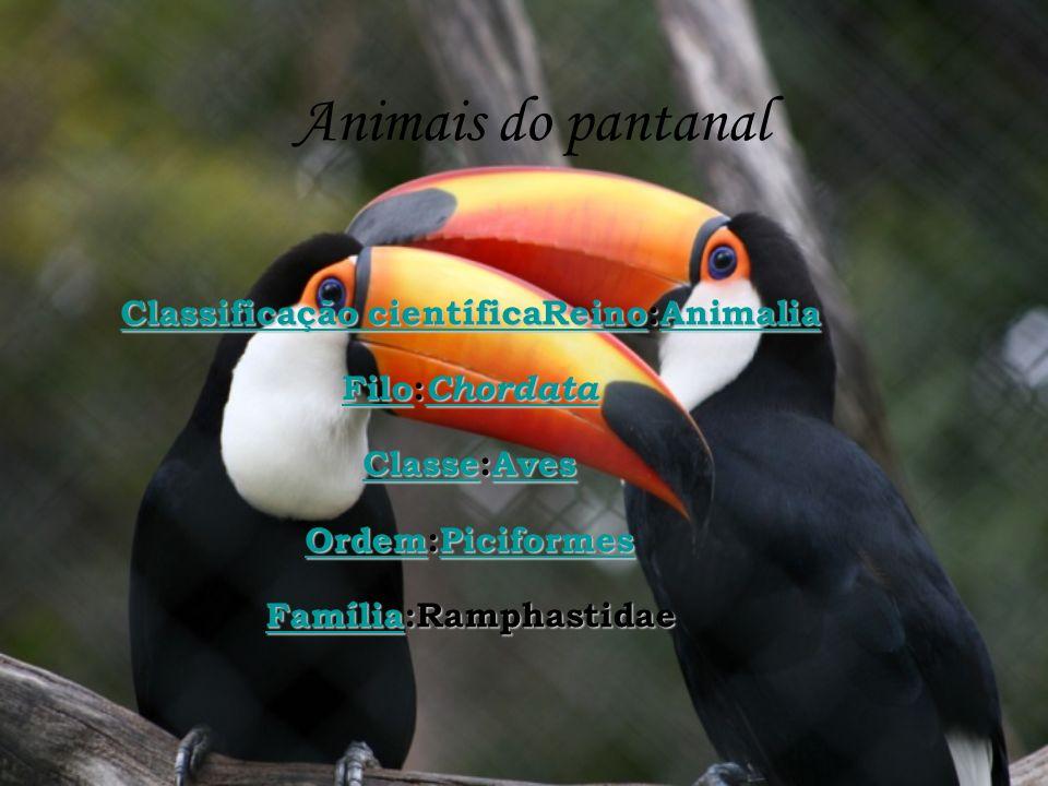 Classificação científicaReino:Animalia Família:Ramphastidae