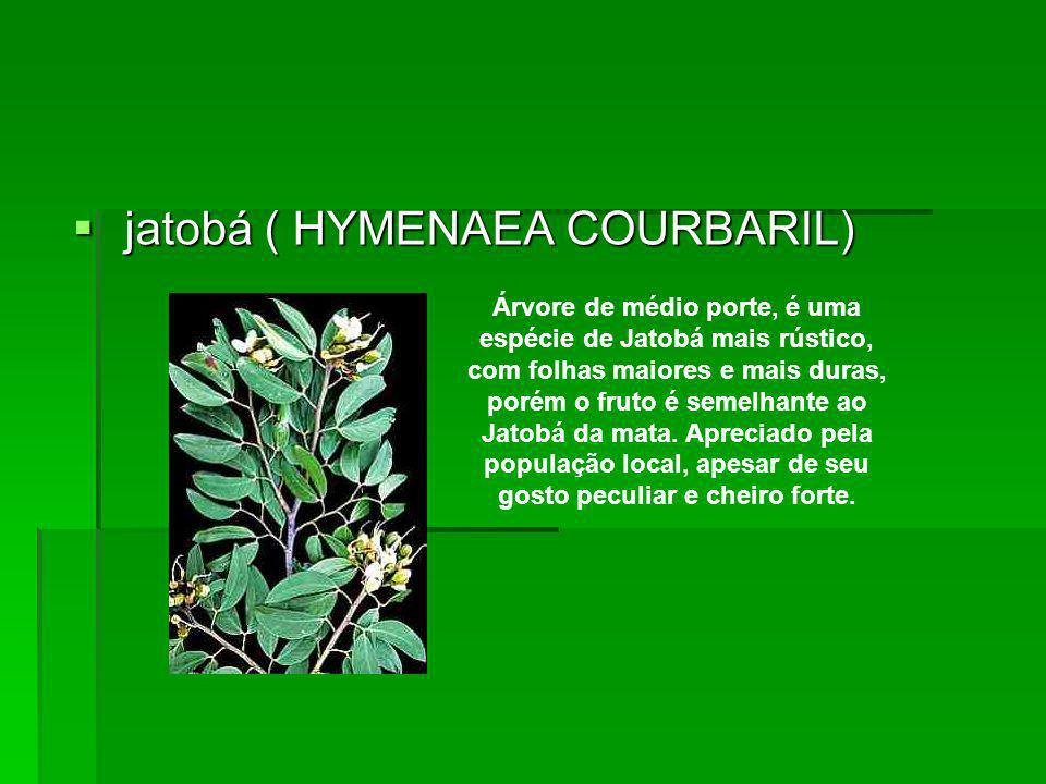 jatobá ( HYMENAEA COURBARIL)