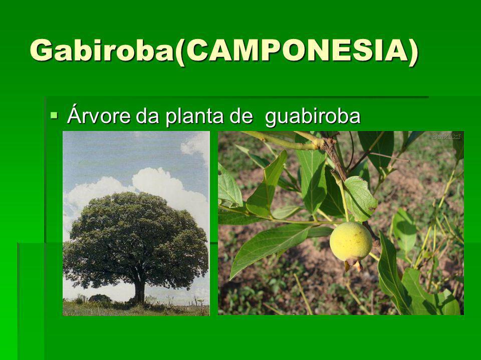 Gabiroba(CAMPONESIA)