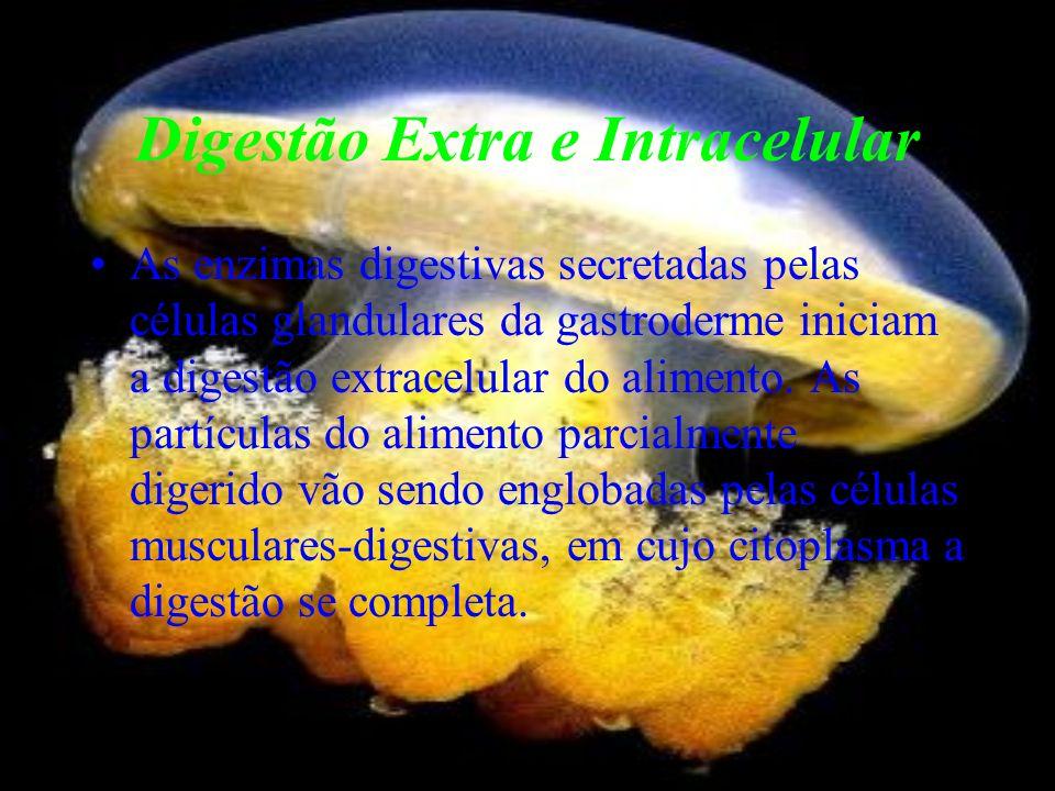 Digestão Extra e Intracelular