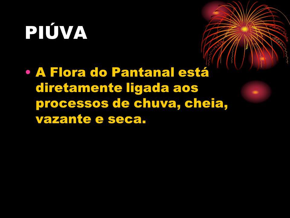 PIÚVA A Flora do Pantanal está diretamente ligada aos processos de chuva, cheia, vazante e seca.