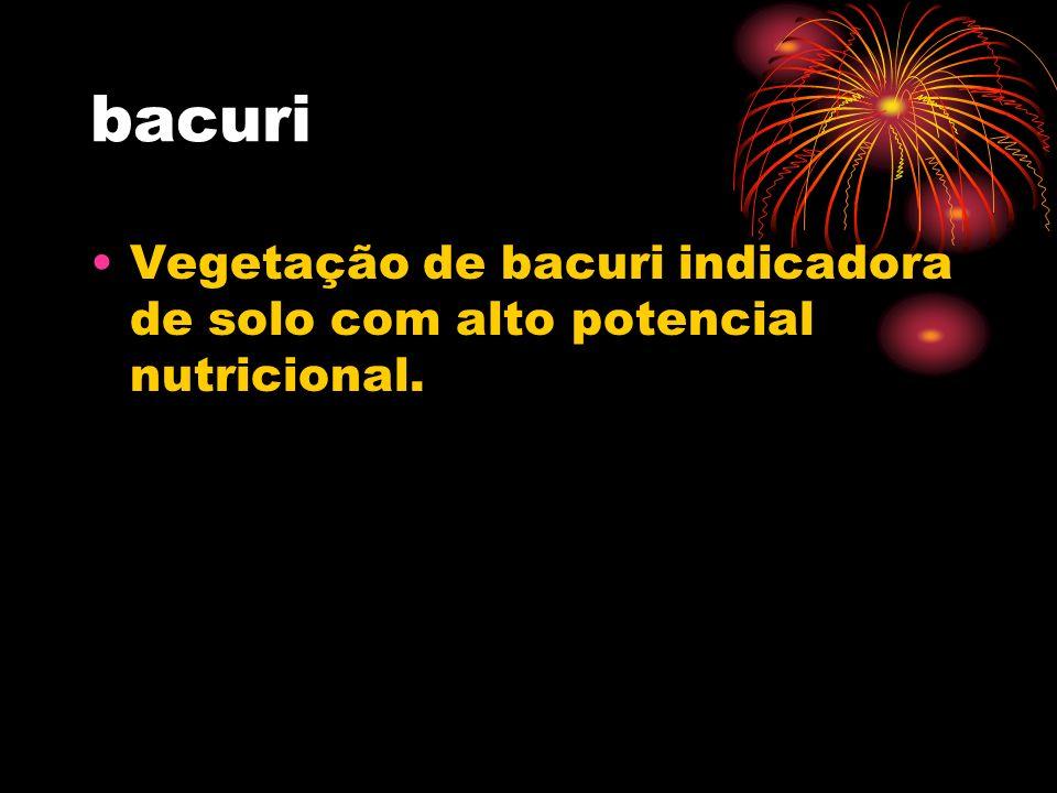bacuri Vegetação de bacuri indicadora de solo com alto potencial nutricional.