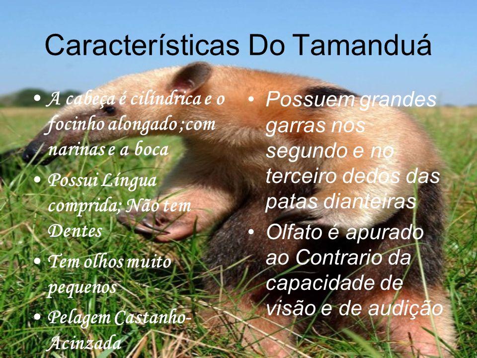Características Do Tamanduá