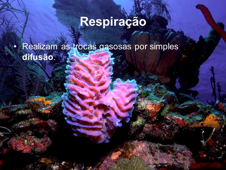 Respiração Realizam as trocas gasosas por simples difusão.