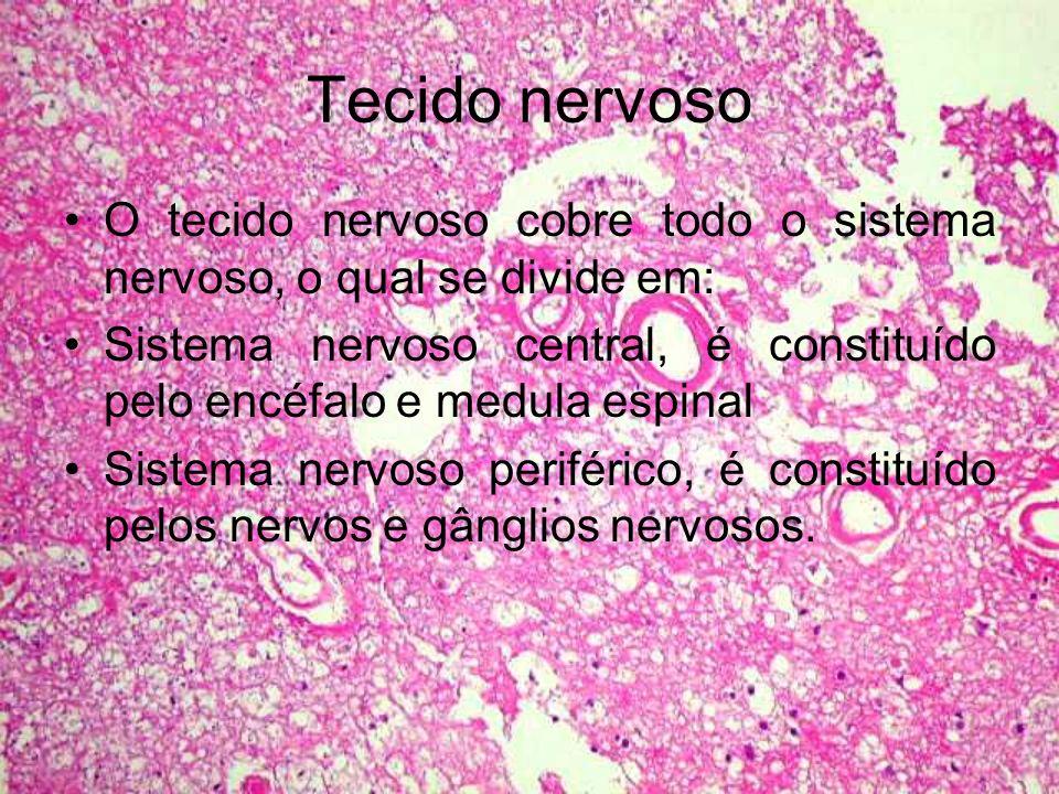 Tecido nervoso O tecido nervoso cobre todo o sistema nervoso, o qual se divide em:
