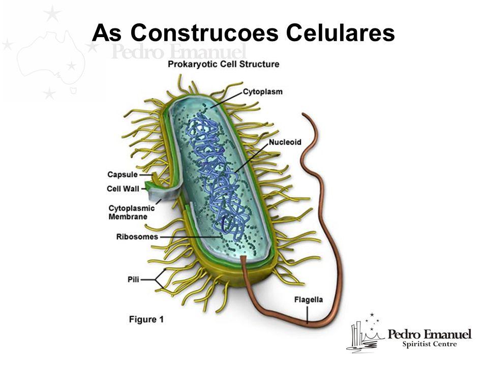 As Construcoes Celulares