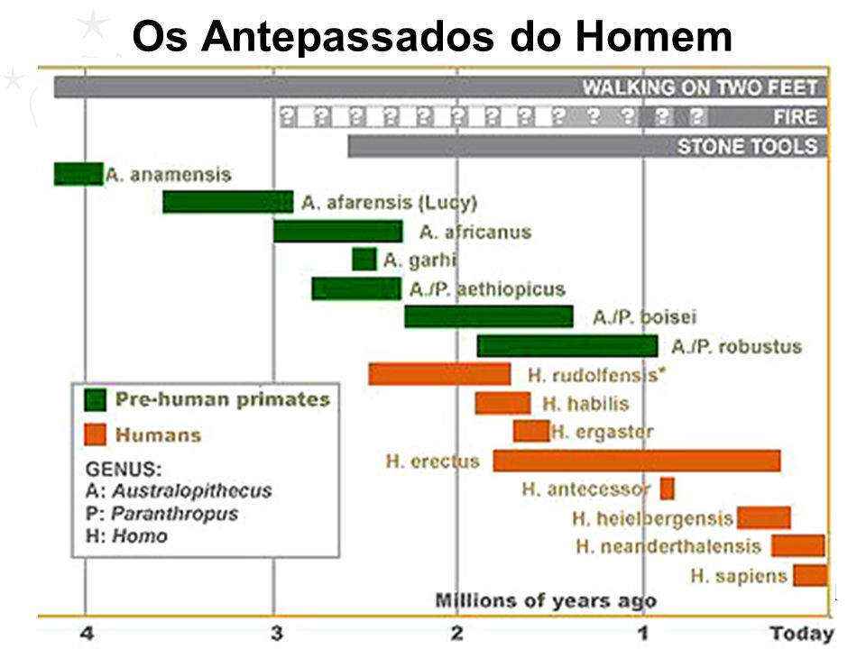 Os Antepassados do Homem