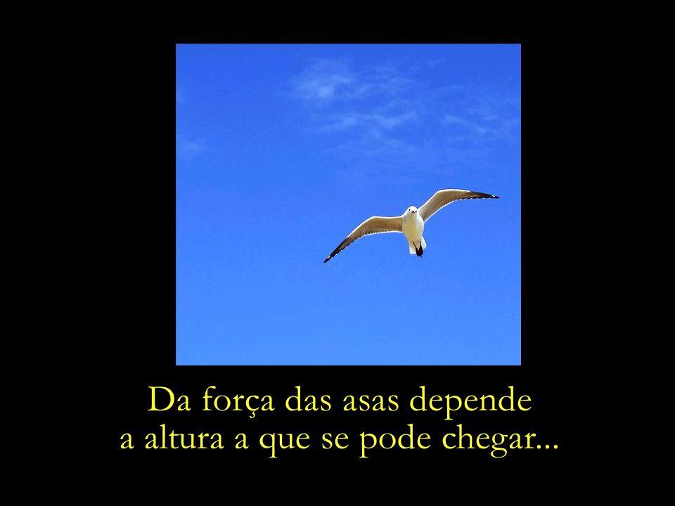 Da força das asas depende a altura a que se pode chegar...