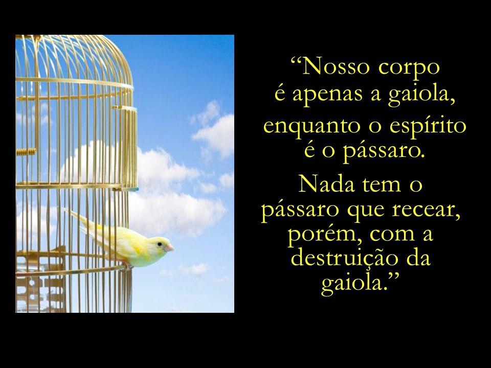 pássaro que recear, porém, com a destruição da gaiola.