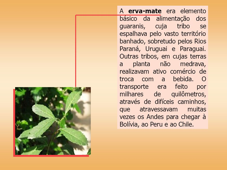 A erva-mate era elemento básico da alimentação dos guaranis, cuja tribo se espalhava pelo vasto território banhado, sobretudo pelos Rios Paraná, Uruguai e Paraguai.