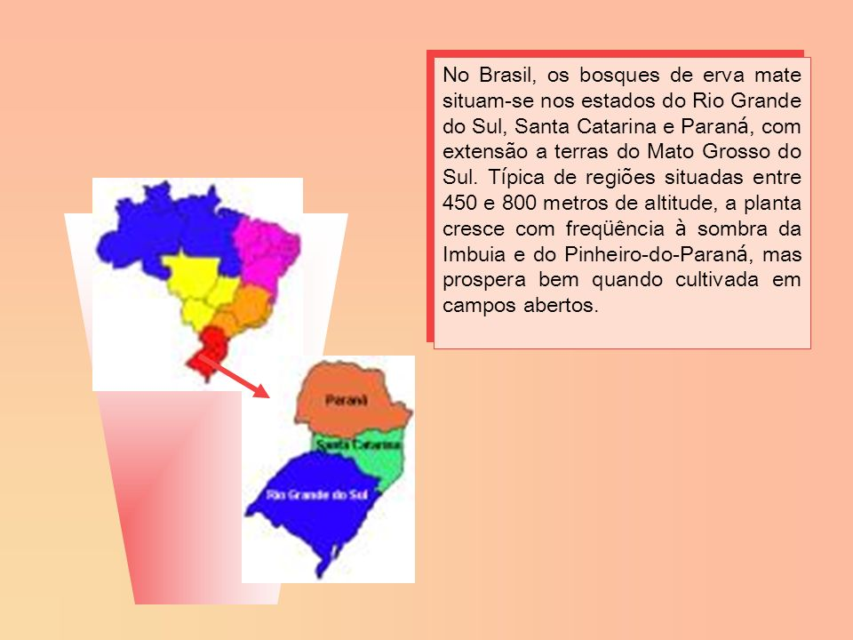 No Brasil, os bosques de erva mate situam-se nos estados do Rio Grande do Sul, Santa Catarina e Paraná, com extensão a terras do Mato Grosso do Sul.