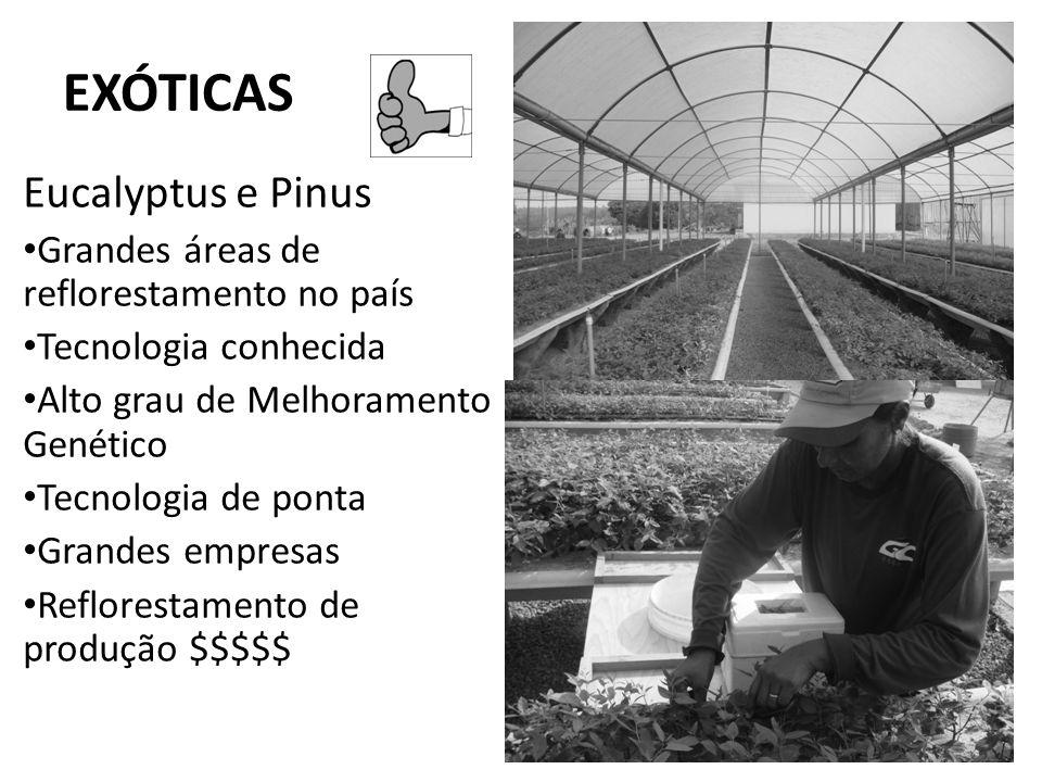 EXÓTICAS Eucalyptus e Pinus Grandes áreas de reflorestamento no país