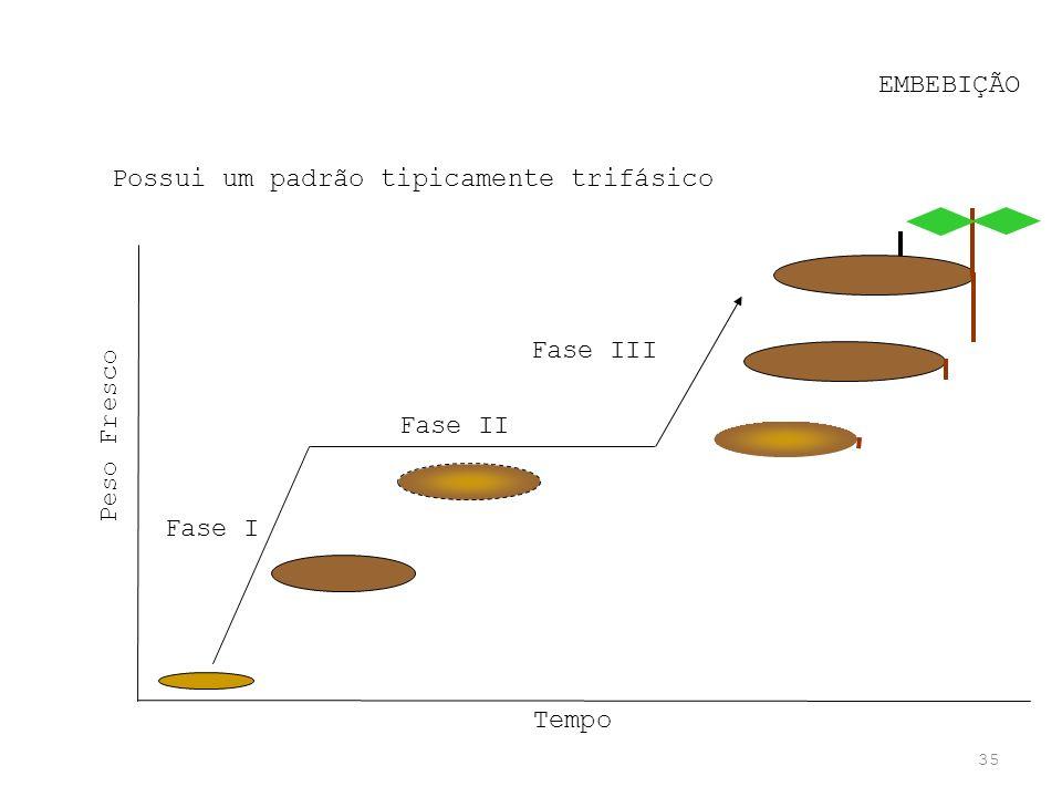EMBEBIÇÃO Possui um padrão tipicamente trifásico Fase III Peso Fresco Fase II Fase I Tempo