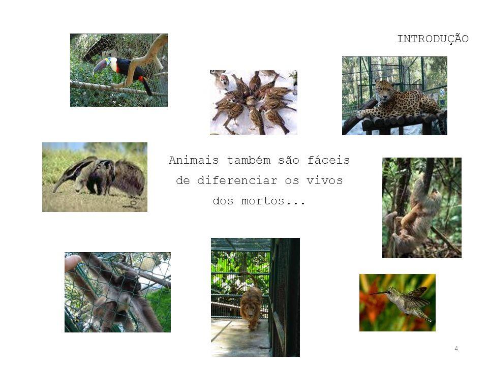 Animais também são fáceis de diferenciar os vivos dos mortos...