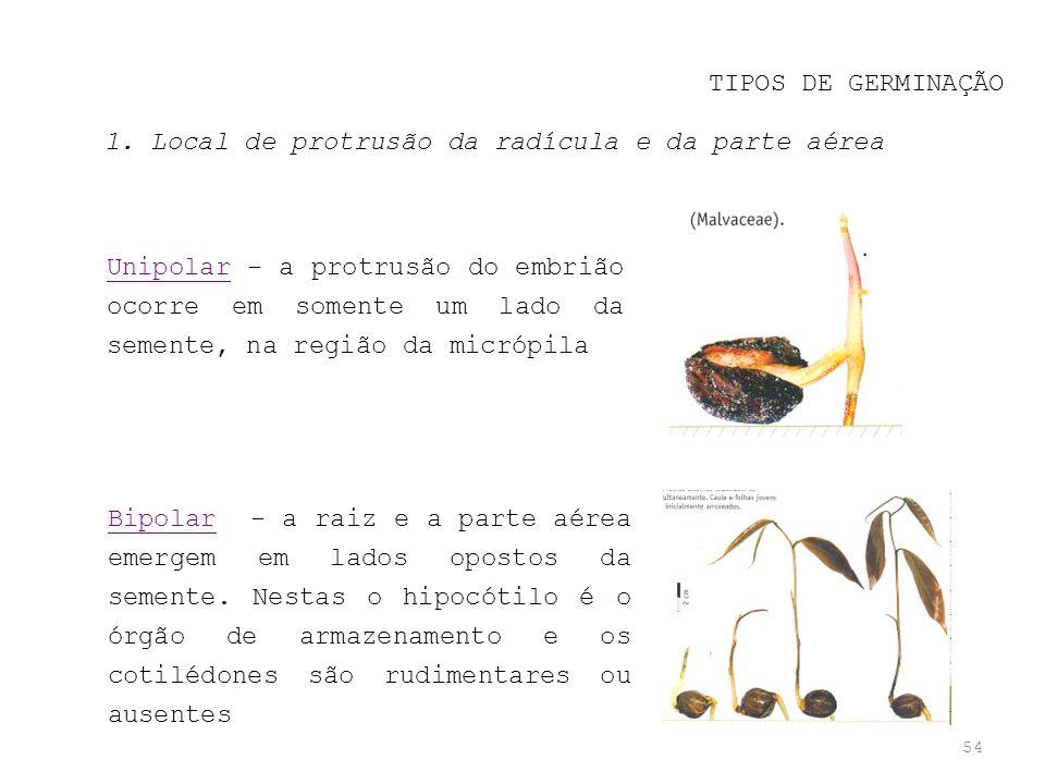 TIPOS DE GERMINAÇÃO 1. Local de protrusão da radícula e da parte aérea.