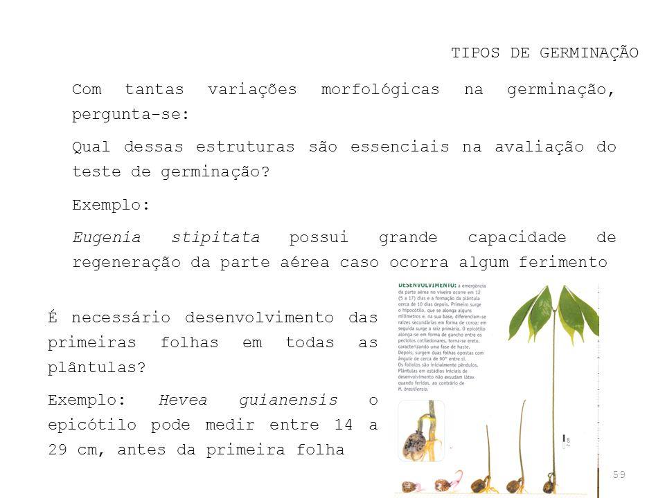 TIPOS DE GERMINAÇÃO Com tantas variações morfológicas na germinação, pergunta-se: