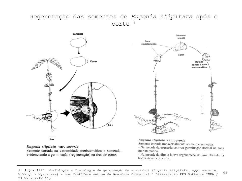 Regeneração das sementes de Eugenia stipitata após o corte 1