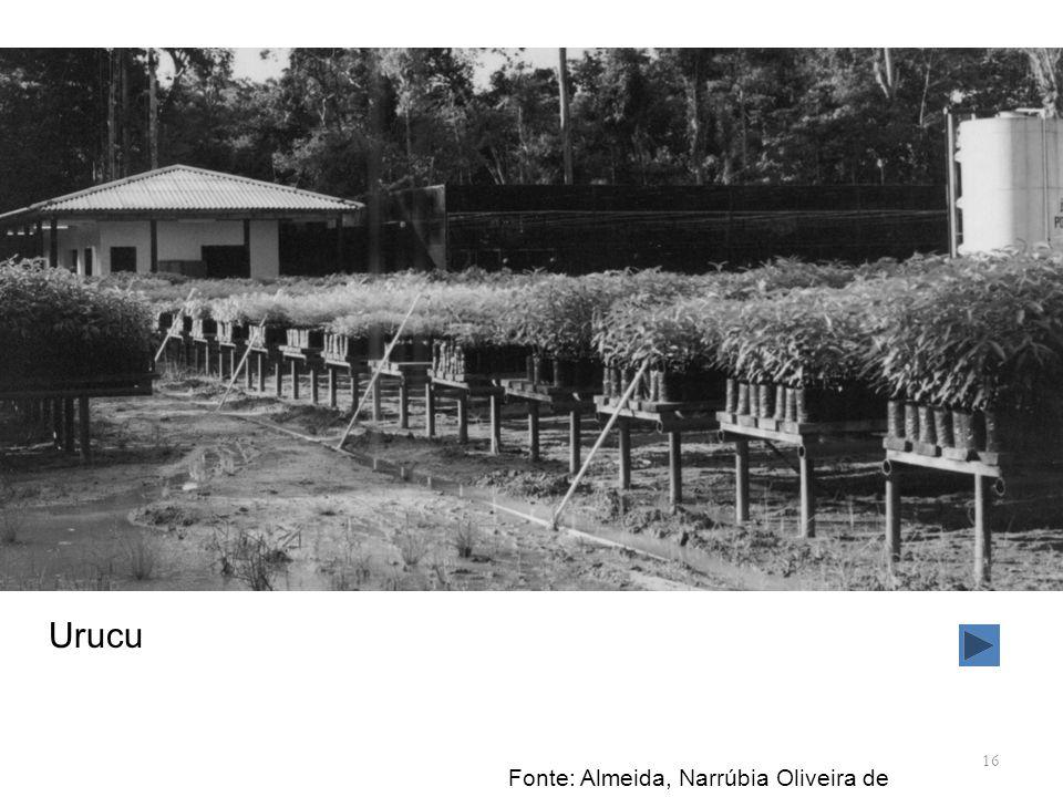 Urucu Fonte: Almeida, Narrúbia Oliveira de