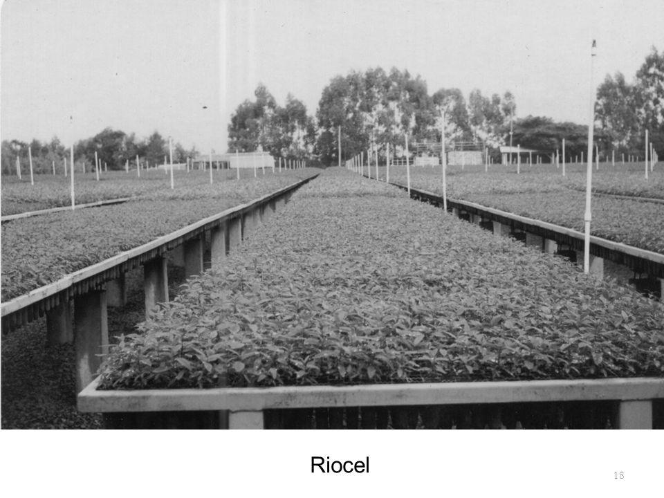 Riocel