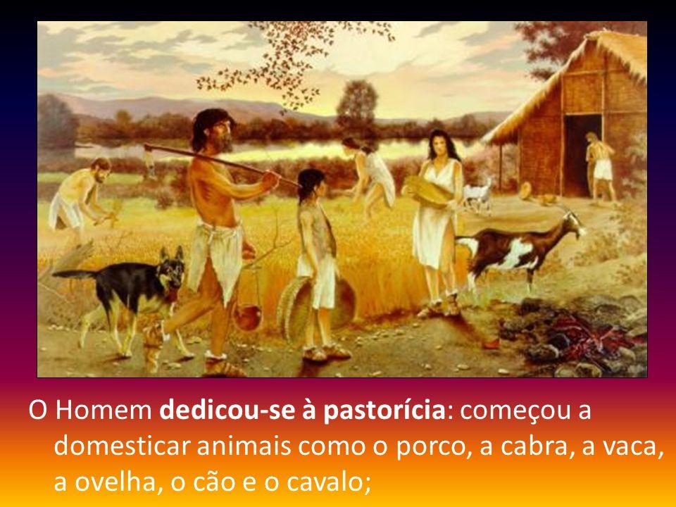 O Homem dedicou-se à pastorícia: começou a domesticar animais como o porco, a cabra, a vaca, a ovelha, o cão e o cavalo;