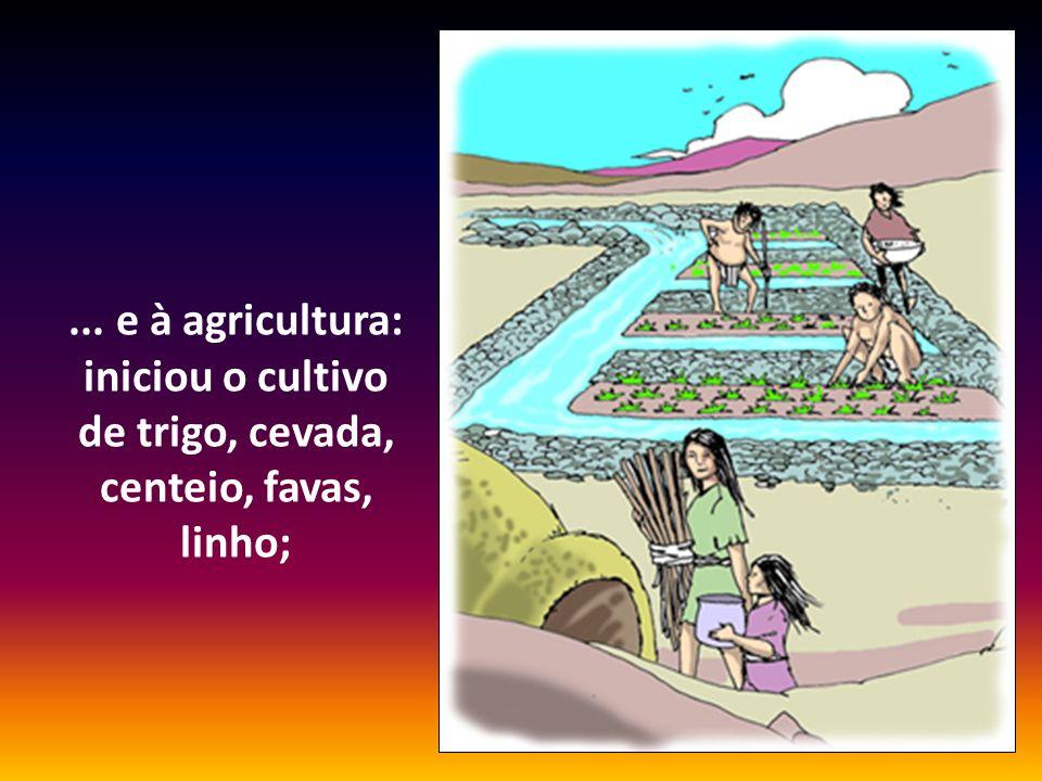 ... e à agricultura: iniciou o cultivo de trigo, cevada, centeio, favas, linho;