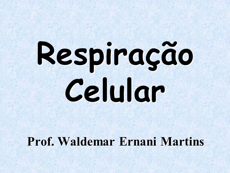 Prof. Waldemar Ernani Martins