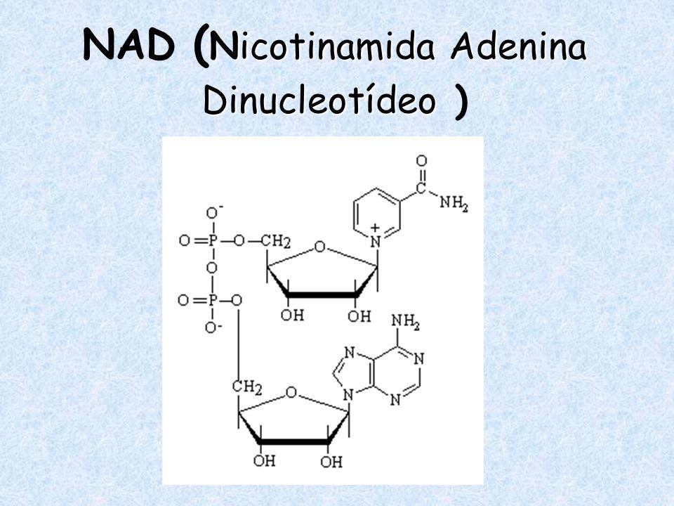 NAD (Nicotinamida Adenina Dinucleotídeo )