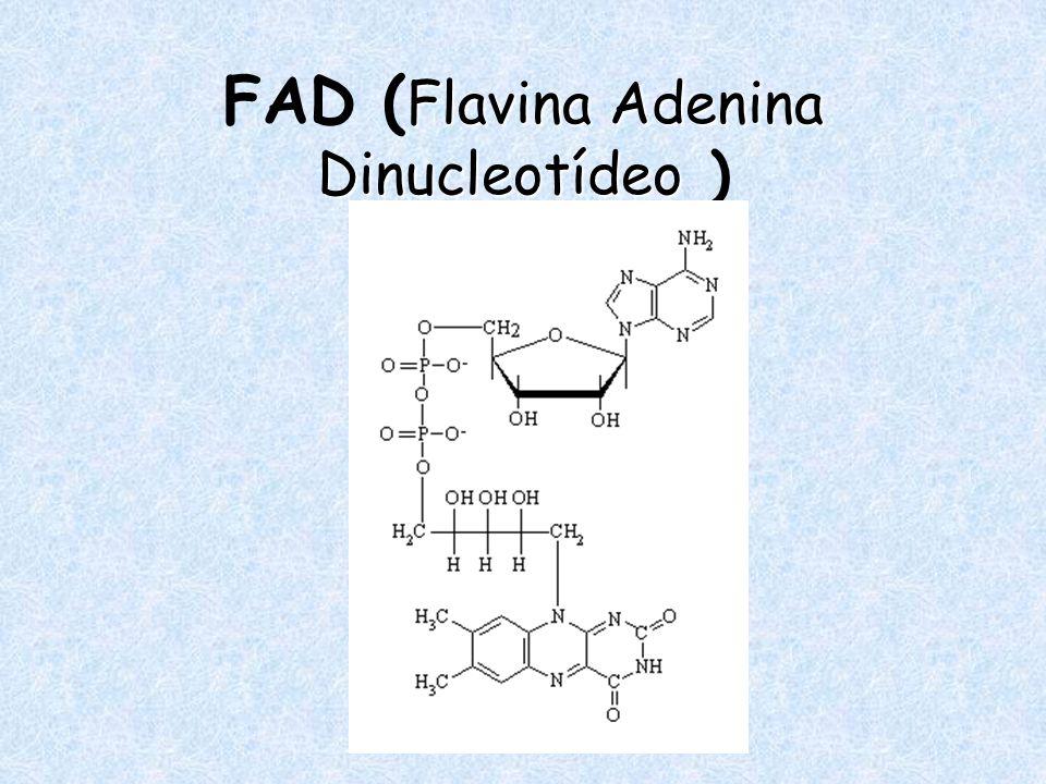 FAD (Flavina Adenina Dinucleotídeo )