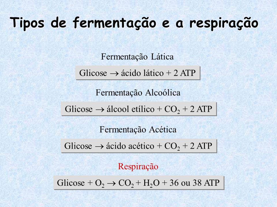 Tipos de fermentação e a respiração